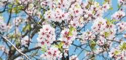 Increased almond yields start with a strong bloom. Give almond trees their best chance of success with a combination of strong disease control, well-balanced nutrition and plant health.
